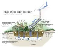residential rain garden resize