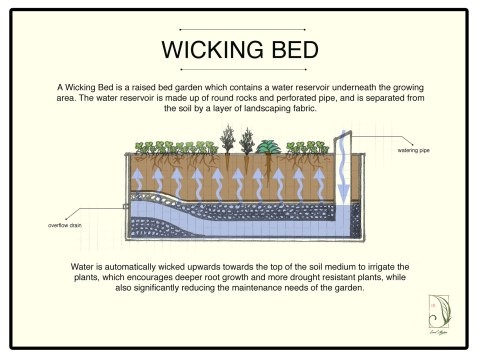 wicking-bed-11